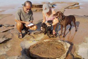 Dinosaur footprints on Kimberley beach
