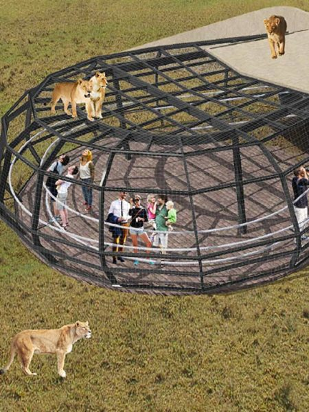 An artist's impression of the lion cage at Monarto Zoo.