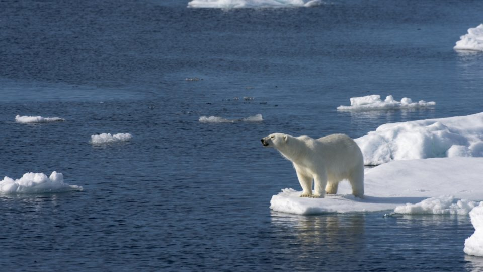 arctic heat waves