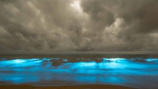 The bright blue glow is caused by billions of single-celled plant plankton which illuminate when disturbed.