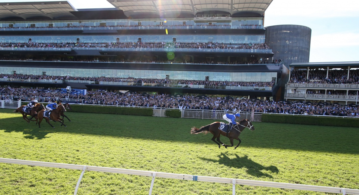 Champion mare Winx races ahead of the pack.