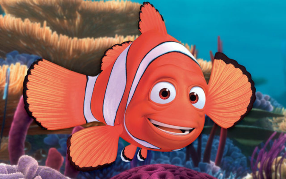 Finding nemo style voyage ends badly for tropical fish species for Finding nemo fish names
