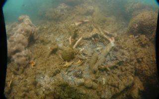 Dead coral off north Queensland