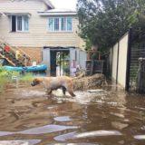 Rockhampton floodwaters