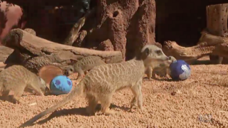 Perth Zoo spreads eggcelent Easter cheer.