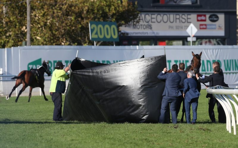 Officials shield the wounded Almoonqith from view while Who Shot Thebarman continues to run in the background. He was eventually caught by an on-track interviewer. Photo: AAP