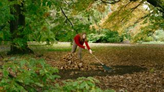 Put down that rake! You have much more pressing matters to attend to this autumn.