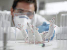 lab rat mice mouse