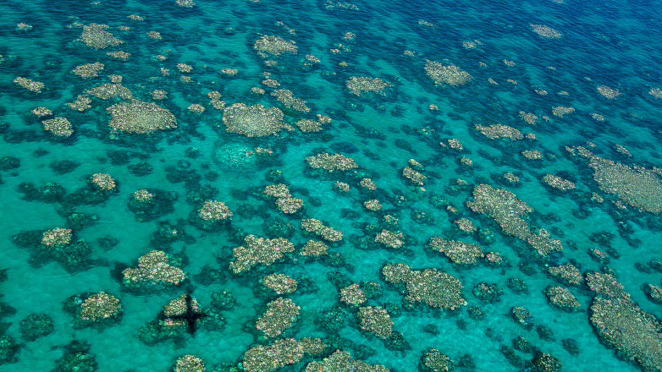 Great Barrier Reef in Australia values $56bn: Deloitte report