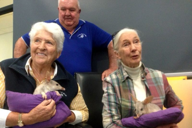 Jane Goodall and Dawn Fraser holding baby bilbies
