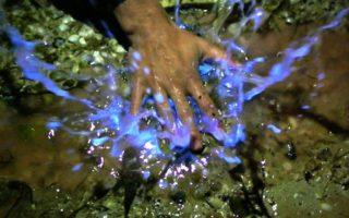 Luminescent algae found in Port Lincoln