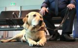 Brogan the guide dog