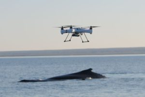 Drone over whale