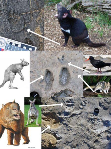 Fossil footprints on Kangaroo Island