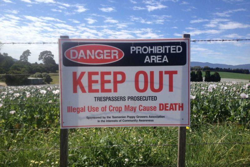 Opium poppy warning sign