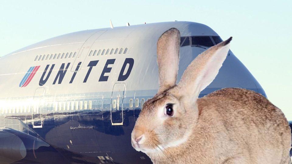 United Airlines rabbit
