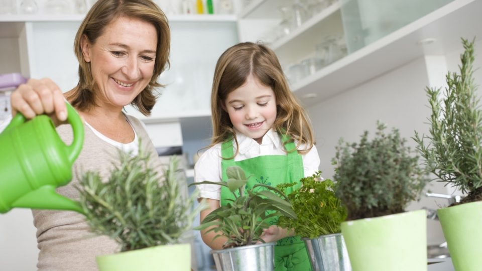 growing plants indoors