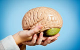 Graceful feminine hands hold anatomical model of human brain
