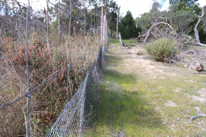 Kangaroo exclosure at Sandy Creek Conservation Park