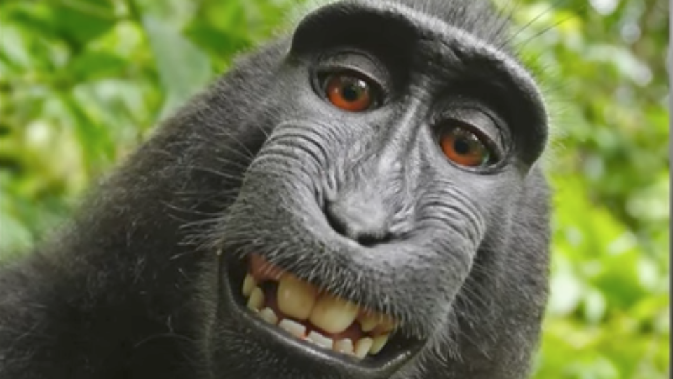 PETA, photographer reach settlement in 'monkey selfie' case