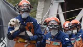 dog pulled from rubble in Mexico earthquake