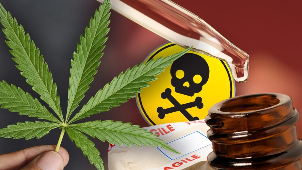 fake cannabis oil sold in Australia