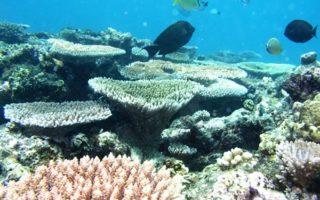 Ellison Reef on the Great Barrier Reef