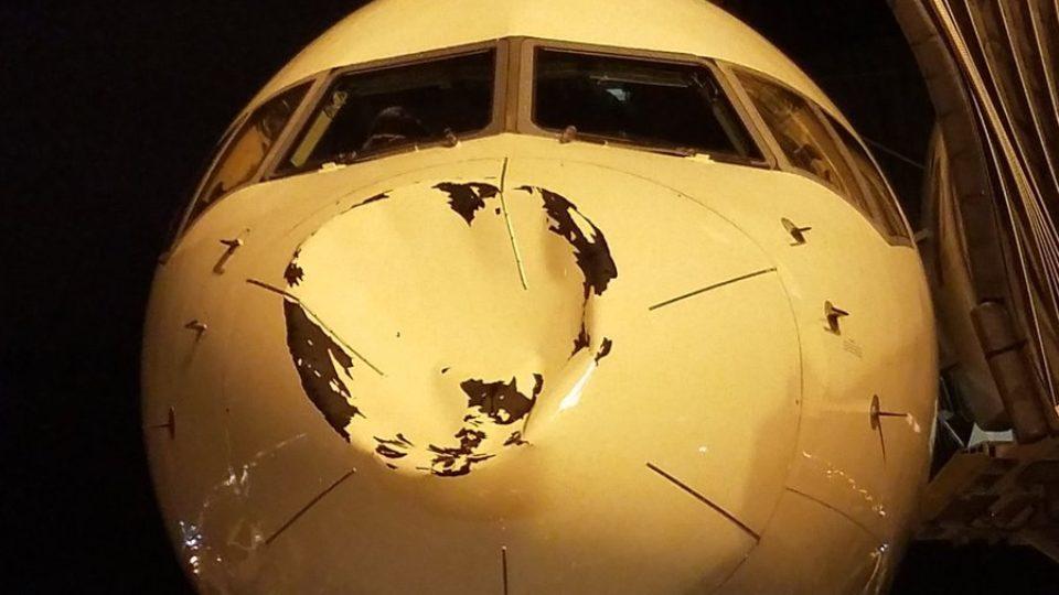 OKC mid-air bird scare