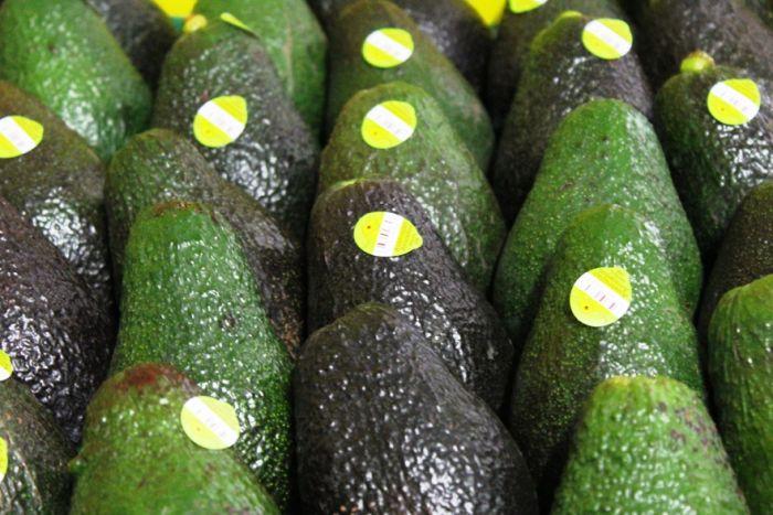 avocado prices