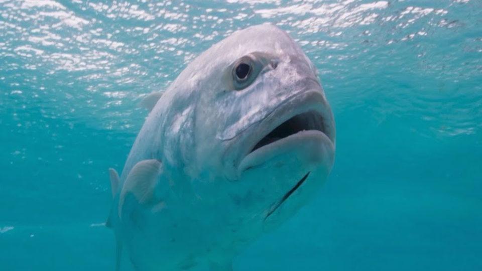 fish david attenborough