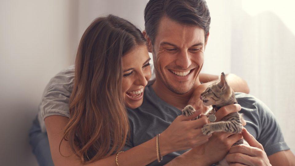 pet owners cat