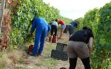 Many fruit pickers are paid less than a quarter of minimum wage.