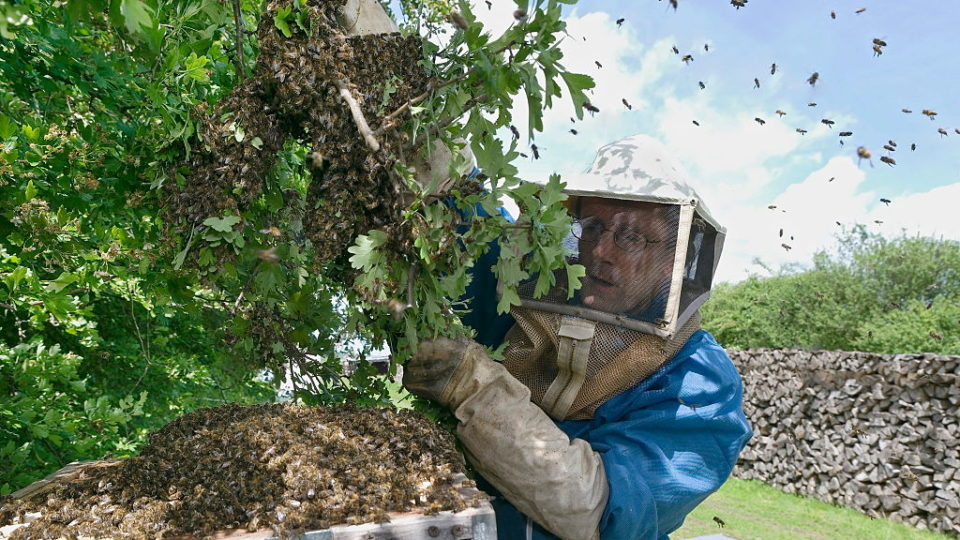 bee infestation Victoria