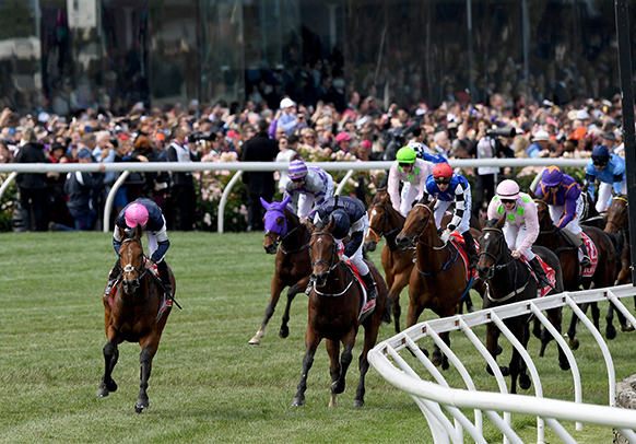 Melbourne Cup horses