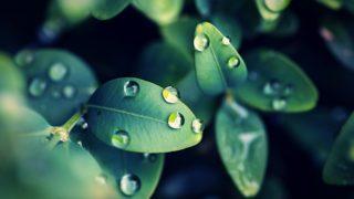 leaves-raindrops