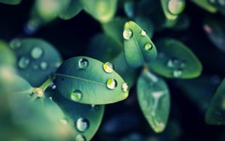 leaves-raindrops