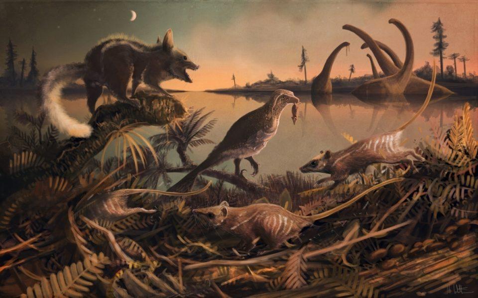 Rat fossils 960x600