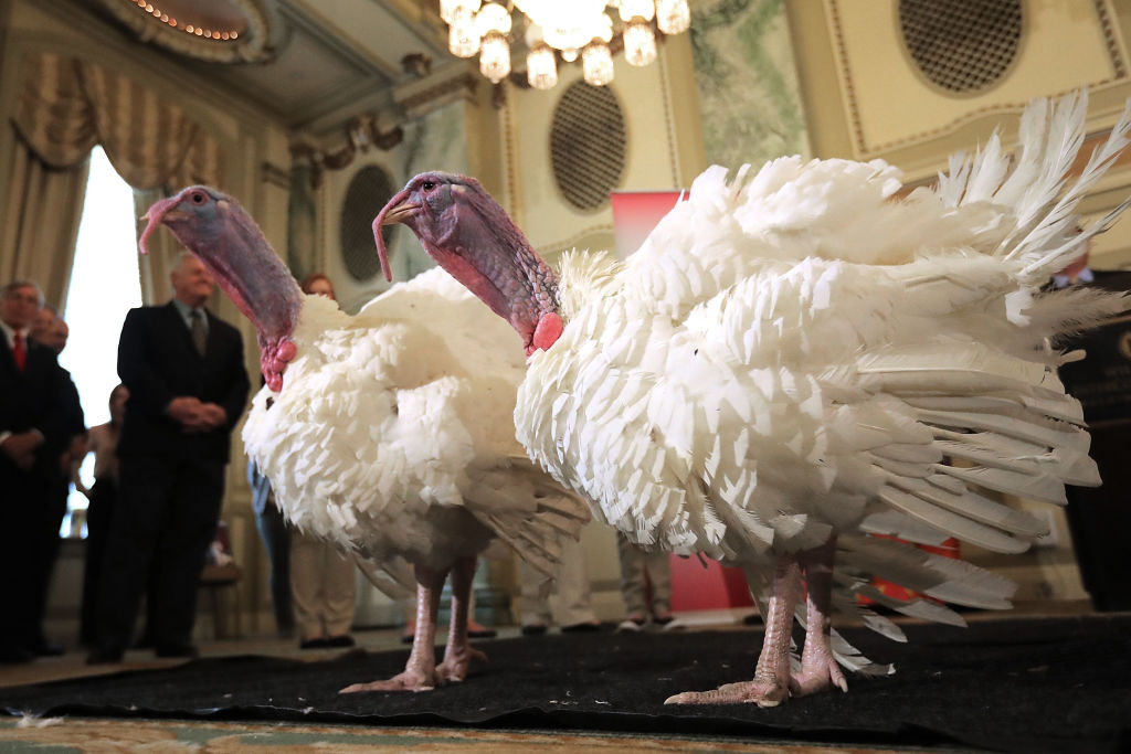 National Thanksgiving Turkey Meets The Press Ahead Of Presidential Pardoning, Donald Trump