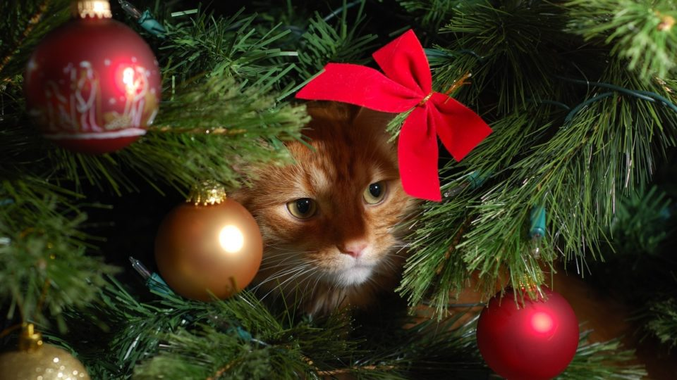 How to avoid a christmas tree cat astrophe this festive season Christmas tree cat tower