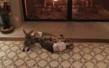 singer gives wife present of kangaroo joeys
