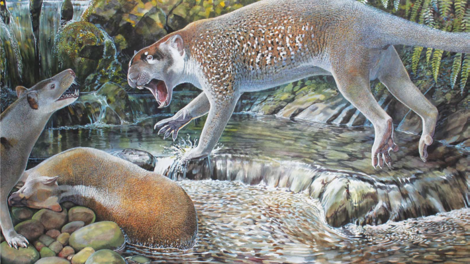 New species of prehistoric marsupial lion unearthed in Australia
