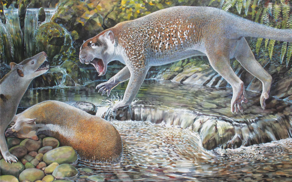 Marsupial Lions Roamed Queensland Fossil Reveals The