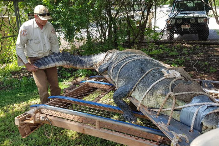 crocodile relocation