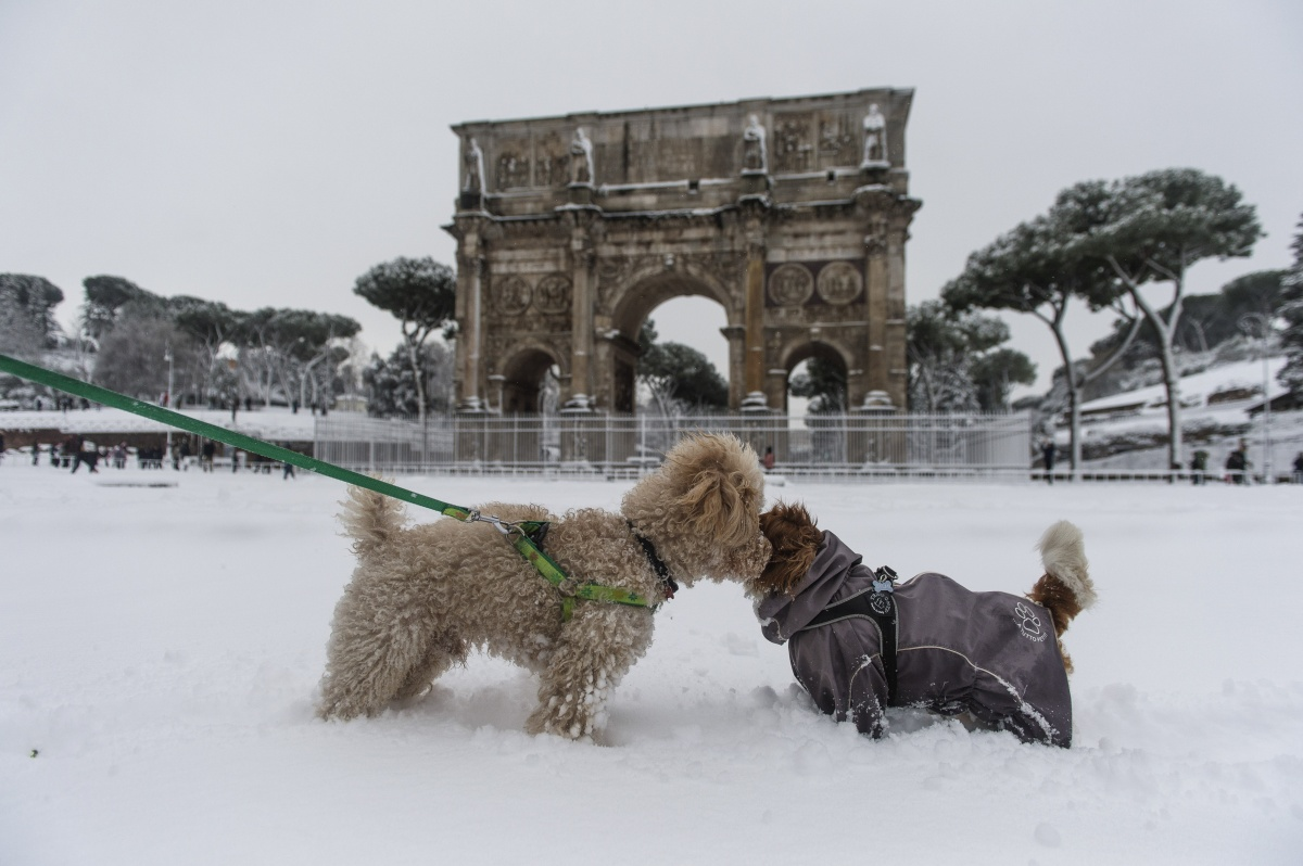 dogs rome italy