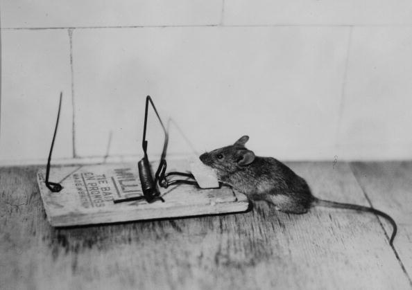 William C Hooker invented the spring loaded mouse trap in 1894 to get rid of mice.