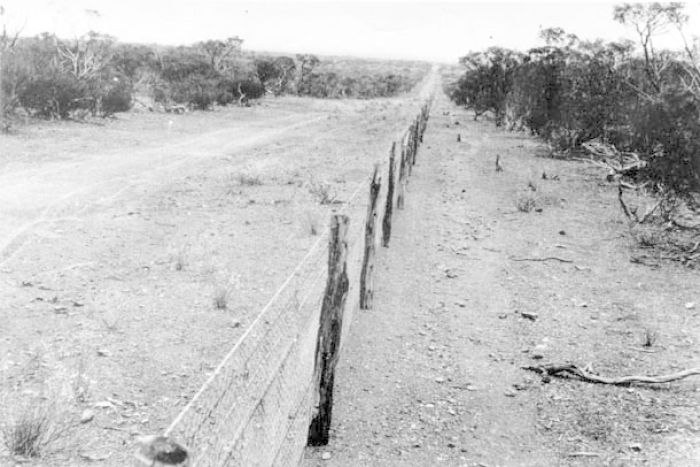 Last Rabbit Proof Fence Sister Daisy Kadibil Dies