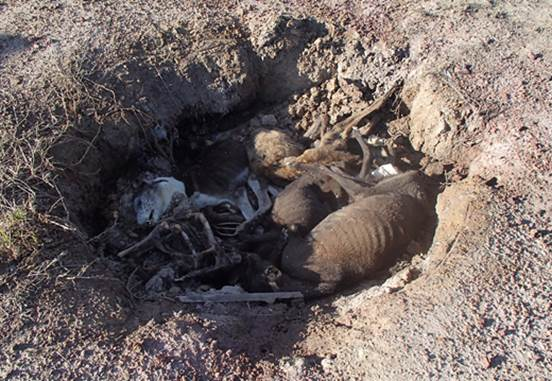 greyhound grave sydney rspca nsw