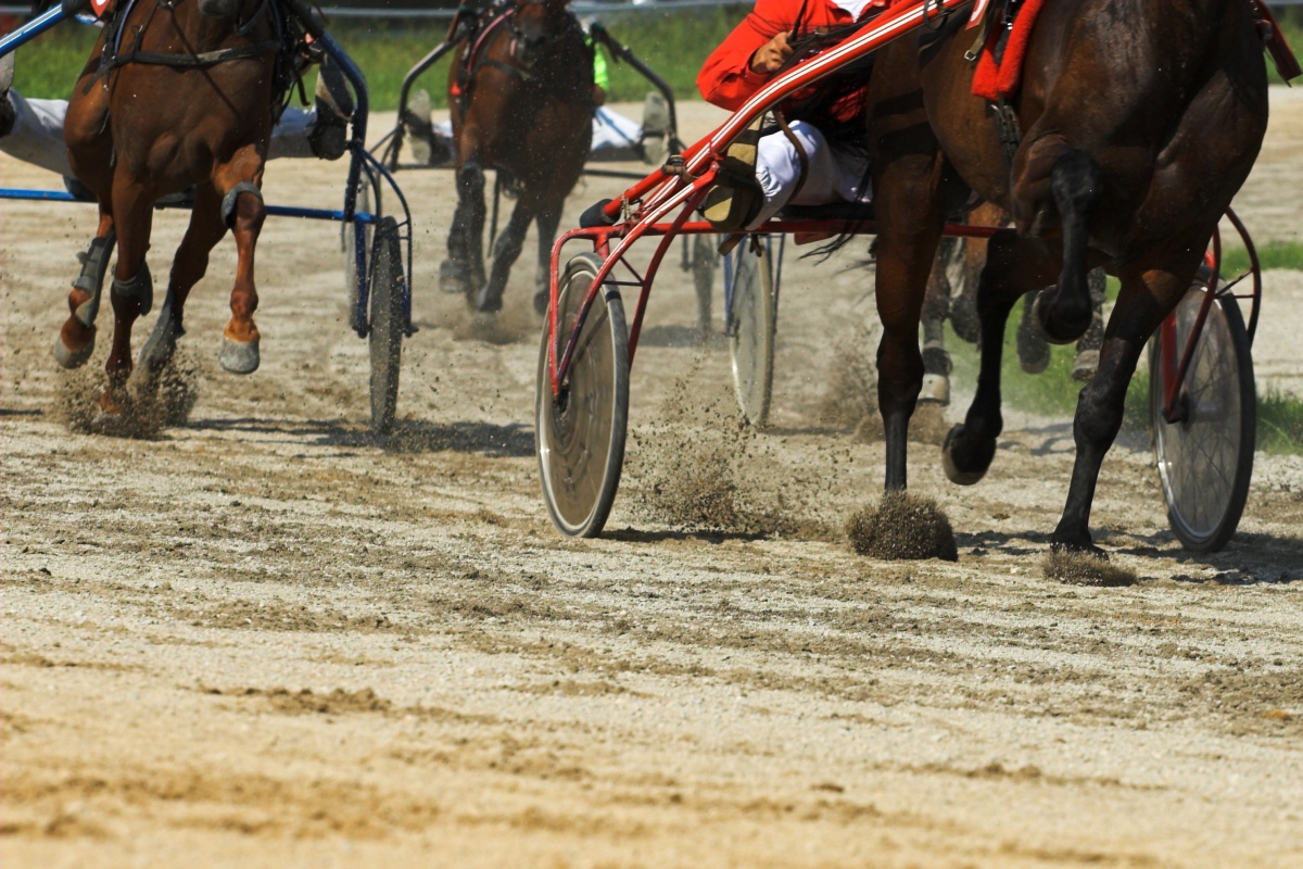 harness racing nsw horse deaths injuries