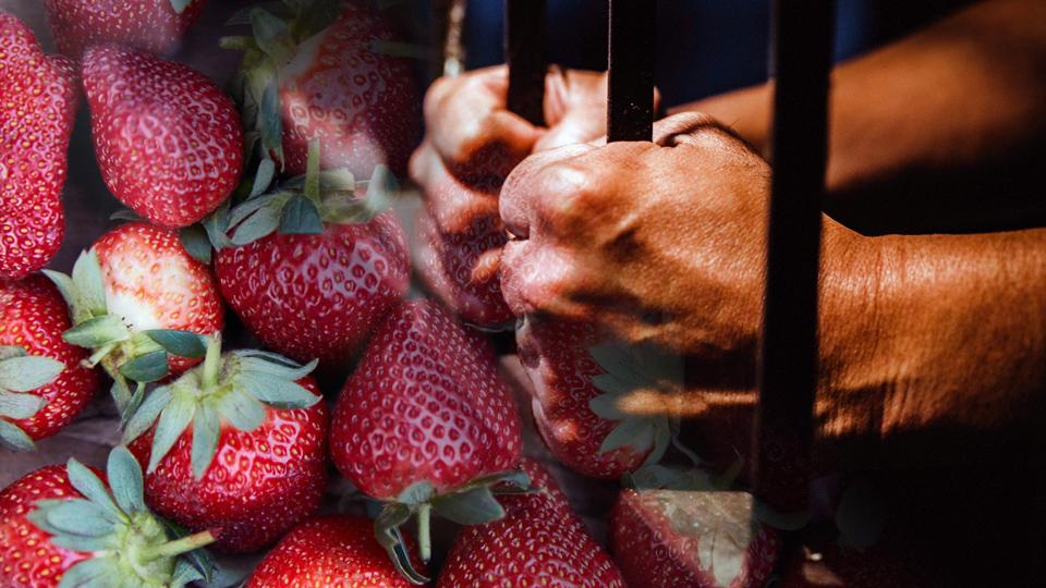 hands jail strawberries