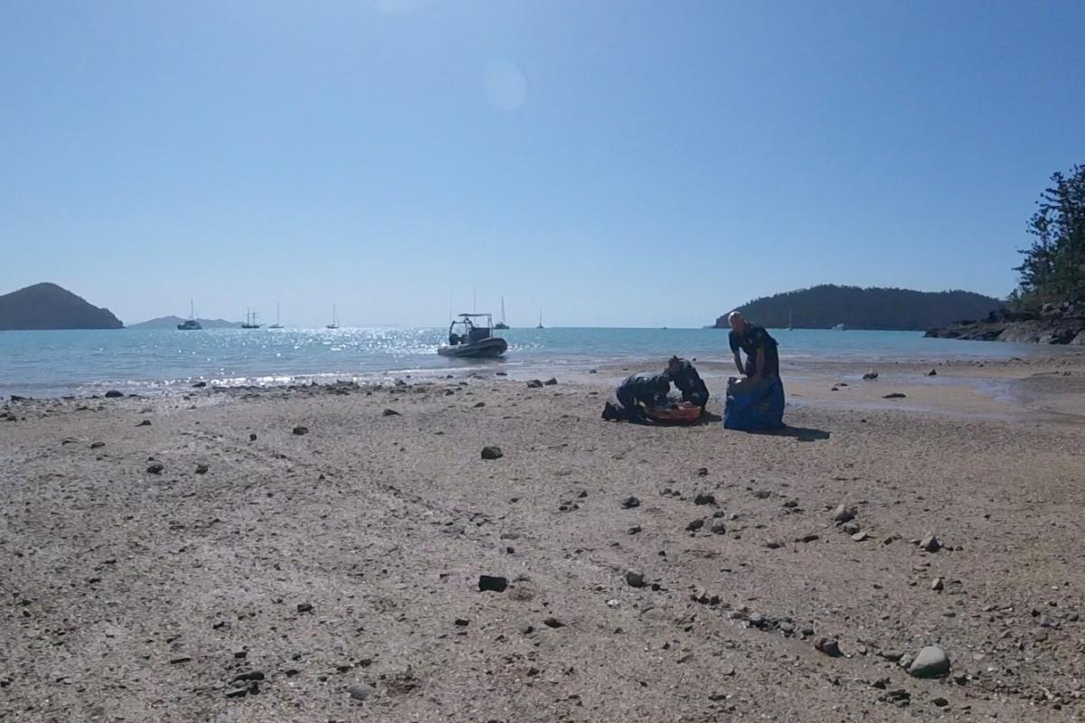 whitsunday island shark attack